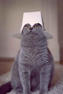 The Commander   The 100 Most Important Cat Pictures Of All Time: Cats, Animals, Stuff, Funny Cat, Funnies, Things, Kitty, Has