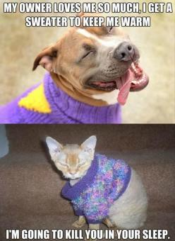 The difference between dogs and cats: Funny Animals, Sweater, Pet, Funny Picture, Funny Stuff, Humor, Funnies, Cats And Dogs