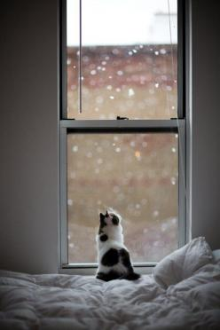 The inevitability of a cat and a window--kitty watching the snow fall: Snow Fall, Cats, Animals, Winter, Kitty Kitty, Windows, Kittens, Photo