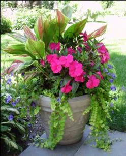 The Pinterest Fairy visited my house today and made my pin/wish come true!!! This is now what I will see every time I go in or out my door. Thank you! I LOVE it!: Garden Container, Shade Pot, Creeping Jenny, Container Gardens, Flower Pot, Container Planti