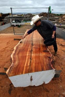 The popularity of salvaged wood furniture has produced a secondary trend: rising efforts to ensure that urban trees, including those that fall during storms, don't end up in landfills. Here's how artisans are turning fallen trees into furniture.: