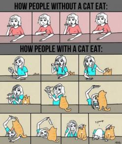 There's just something great about cats!: Cats, Cat Eat, Animals, Funny, So True, Crazy Cat, People, Cat Lady