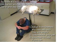 there are NO responsible breeders while shelters are full & animals die in the thousands daily. #Adopt #Volunteer & help be the change for ALL pets .... & check your pins for status - the dog U share may be safe or dead - your pin could be the