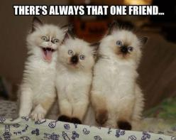 There`s always that one friend... | cute and funny friendship quotes | funny cats: Cats, Sister, Animals, Friends, Quote, Funny Stuff, Humor, Funnies