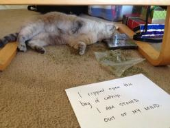 This Cat Needs an Intervention: Animals, Funny Pics, Funny Cats, Funny Pictures, Cat Shaming, Funny Quotes, Funny Stuff, Animal Shaming, Funny Animal