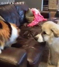 This dog who taught us about enduring the worst of friends. | The 47 Absolute Greatest Dog GIFs Of 2013