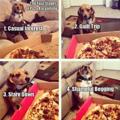 this is my dog. But after begging its shivering and then attack before being stopped: Pizza Bargaining, Animals, Dogs, Funny Stuff, Funnies, Beagle, Funny Animal