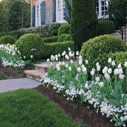 This is my favorite! Plant tulip bulbs and then a thick bed of pansies over them. When the tulips break through it is truly beautiful and southern. One of my favoroites!: Flower Border, White Flower, Plant Tulip, Front Yard, Planting Tulip, White Garden,