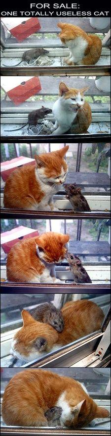 This is too cute! If you forget that it's a mouse...: Cats, Useless Cat, Animals, Totally Useless, Pet, Funny, Crazy Cat, Kitty, Friend