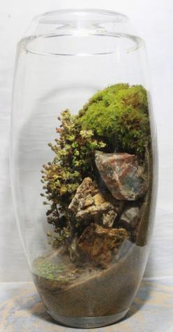 This looks awesome! Like a mini ecosystem!: Terrarium Idea, Auqa Terrariums, Houseplants, Slug, Mini Gardens