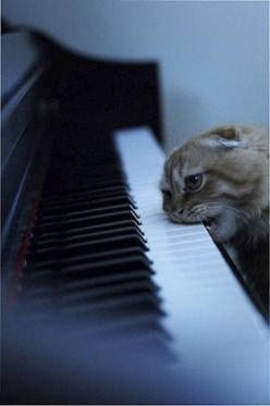 This looks delicious....stupid cat: Crazy Cats, Playing Piano, Silly Cats, Funny Cats, Hated Piano, Piano Keys, Kitty Piano