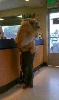 This makes me so happy. Dog hug <3: Animals, Dogs, So Cute, Pet, Big Baby, Funny, Puppy, Know
