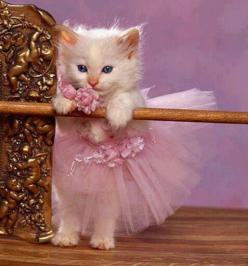 Tiny Dancer - I'm usually not a fan of pets in clothes, but this is cute, and the kitty doesn't look too traumatized. ;): Cats, Safe, Animals, Ballerinas, Pet, Pink, Kittens, Kitties