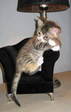 Tiny Little Kitten In Tiny Chair.  <3 Love <3  Thanks to Sherry Gatchell and the ilovefunnycats.me folks for repin of this adorable baby.: Cats, Chair, Animals, Sweet, Pet, Crazy Cat, Chat, Kittens, Kitty