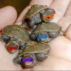 TMNT!! When I was 3 I had a pet turtle. If he had 3 siblings we DEFINITELY would have done this. Haha. But since we only had one my brothers couldn't decide which one was the best, so we left him a regular turtle... </3: Animals, Stuff, Tmnt, Ninja