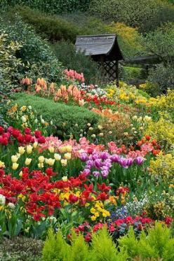 Tulips at Little Larford - Worcestershire - By Clive Nichols. What's more charming and colorful than an English Garden?: Spring Flower, Color, Outdoor, Beautiful Flowers, Flower Gardens, Beautiful Gardens, Flowers Garden, Garden
