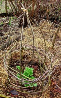 Twig cage can protect young plants from being munched on by rabbits, chickens or other critters: Plant Protector, Good Ideas, Garden Trellis, Trellis Idea, Supports Diy, Fall Plants, Twig Supports, Vegetable Garden, Diy Projects