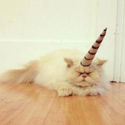 Unicorn Cat... HAHA haha!! This made me laugh WAY more than it should've...: Animals, Unicorn Cat, Real Unicorn, Fat Cat, Happy Cat, Things Cats, Unicorns, Funny Unicorn