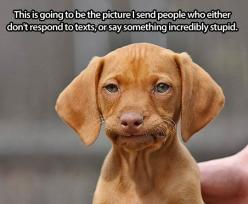 Useful face... - The Meta Picture: Animals, Faces, Dogs, Funny Stuff, Puppy, Funnies, Humor, Things