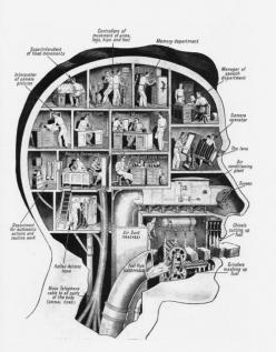 Vintage brain segment activity schematics: Office, Idea, Brain Function, Anatomy, Fritz Kahn, Illustration, Infographic, Health, Room
