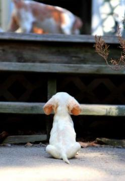 waiting: Animals, Sweet, Dogs, So Cute, Pets, Adorable, Puppy, Things, Baby