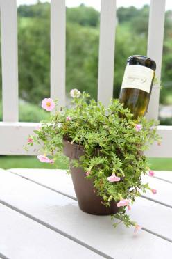 Water your plants while you're away with this brilliant idea!: Water Plants, Garden Ideas, Gardening Outdoor Ideas, Wine Bottles, Tips, Watering Wine, Self Watering, Flower