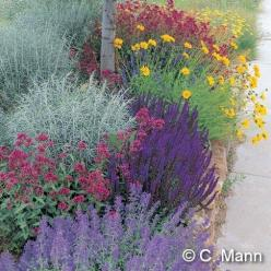 Waterwise combo of  Salvia, Achillea, Nepeta, Coreopsis, Centranthus and  Artemisia.: High Country, Garden Ideas, Color, Waterwise Garden, Front Yard, Country Gardens, Water Wise, Jumbo Waterwise