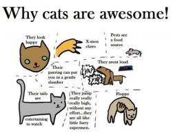 We all know how awesome our kitties are. Check out this great chart that proves cats are AWESOME!: Cats, Animals, Kitty Cat, Meow, Stuff, Awesome, Funny, Crazy Cat, Cat Lady