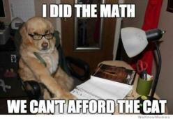 We can't afford the cat... #jetpets #happytravellers www.jetpets.com.au: Funny Animals, Cat, Funny Dogs, Pet, Funny Stuff, Funny Dog Meme, Dog Memes, Animal Memes