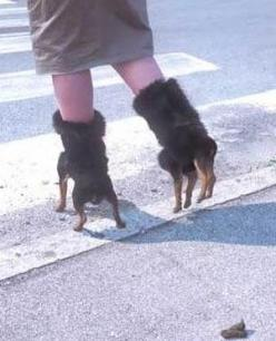 WHAT THE...? Ahhhhhh! *runs away screaming*: Fashion, Dogs, Stuff, Crazy Shoes, Funny, Weird Shoes, Things, Wtf