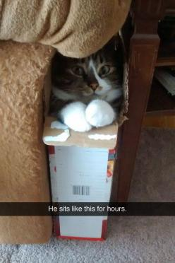 Whatever keeps them content... And out of trouble for that matter :): Sit, Cats, Fit, Animals, Boxed Cat, Funny Cat, Funny Pictures, Funny Animal