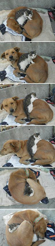 When you need a bigger blanket....  <3  Good friends: Animals, Sweet, Dogs And Cats, Cuddle Buddy, Pet, Dog Cat, Cats And Dogs, Friend