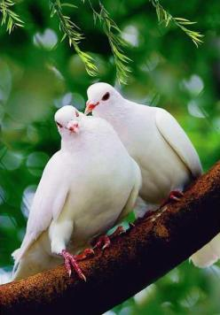white doves.  While I was pregnant with our daughter...I was still suffering from anxiety because we had had a miscarriage.  I was staying with my in-laws and there in the window of the bedroom I was sleeping was a momma dove and her two babies.  To me...