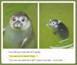 Who would tell him to leave?UNLESS The mean girl seal thing is trying to get rid of him cuz he showed her up in the third grade and she's still mad about that embarrassing play that he was better at. DON'T JUGDE ME IT COULD HAPPEN!!!!!: Seals, Ani