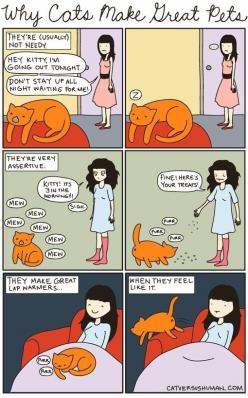 Why Cats Make Great Pets: Cats, Pet, Versus Human, Cat Vs Human, Crazy Cat, Kitty, Animal, Cat Lady
