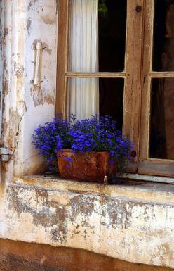 window and lobelia  LOVE the simplicity of this!: Windowbox, Blue Lobelia, Color, Window Sill, Windows, Blue Flower, Garden, Window Boxes