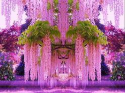 Wisteria (Fabaceae).: Japan, Nature, Beautiful, Gardens, Pink, Places, Flowers, Photo, Purple Wisteria
