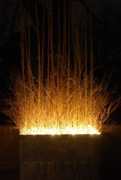Wow! Ornamental grass in planters with fairy lights grouped at the base of them. Spectacular.: Lighted Walkway, Top Garden Light Idea, Dirt Simple, Winter Container Garden, Easy Garden Light Idea