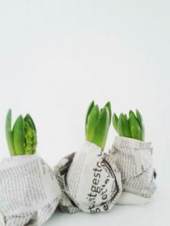 Wrap your bulbs in news paper while you preserve them before planting or giving it as a gift. The newsprint adds a bit of style to the bulbs. You can even tie a string of twine around the neck to secure the paper and add to the gift wrapping.: Gift Ideas,