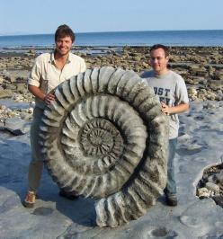 Yes, it's real!! A giant ammonite (http://en.wikipedia.org/wiki/Ammonoidea) fossil.  Giant Ammonite Fossils: Giant Ammonite, Years Ago, Nature, Stuff, Ammonitefossil, Rock, Fossils, Ammonite Fossil