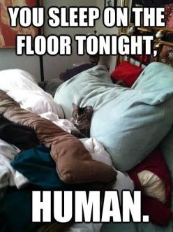 You sleep on the floor tonight....: Cats, Animals, Funny Cat, Bed, Funny Stuff, Funnies, Funny Animal, Kitty