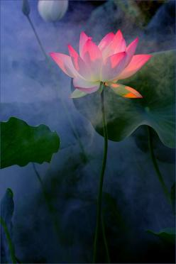 Zen in nature - lotus flower The lotus flower has a symbolic meaning which represents being pure in one's spirits.The flower produces beautiful petal even if it grew in the dirtiest waters. The lotus flower symbolizes rising up out of badness and grie