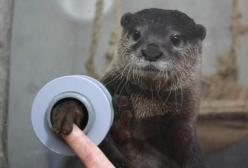 Zoo that lets you shake hands with otters.  My heart just broke all over the place.: Bucketlist, Bucket List, Animals, Stuff, Otters, Aquarium, Places, Things