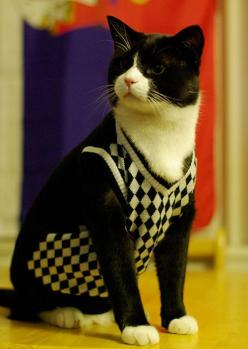 25 Animals Who Think They're People / Cats Who Think They are British Schoolboys from the '50s: Cats, Sweaters, Animals, Pet, Sweater Vests, Kitty, Cat Lady