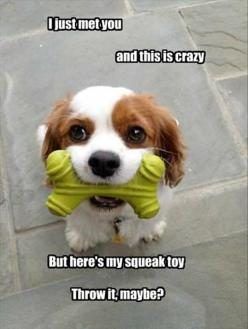 30 Funny animal captions - part 9 (30 pics): Funny Animals, Dogs, Toy, Stuff, Pet, Funnies, Puppy, Adorable