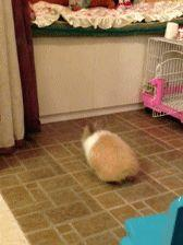 30 Heartbreakingly Hilarious Animal Fails 50 - https://www.facebook.com/diplyofficial: Adorable Bunny, Rabbit, Stuff, Funny, Hilarious Animals, Poor Bunny, Bunnies, Bunny Jump, Gifs