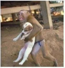 """During a dangerous factory explosion that occurred in china, a monkey was recorded on the camera saving a puppy from the explosion site. he held the dog as he ran out of the factory.  if animals can instinctivley show compassion and kindness to each"