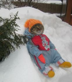 "* * "" Me human calls it cute, but I calls it subdued funky with just a gentle hint of animal cruelty, namely, dis animal."": Animals, My How Funny, Winter Is Coming, Awesome Cat, So Funny, Bound Kitty, Bet Kitty, Winter Kitty"
