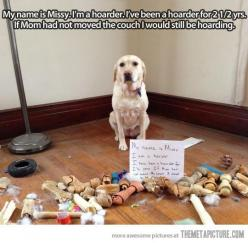 """...why hasn't this lady cleaned under her couch in 2.5 years? Gross."" ^i pinned this for the comment haha: Animals, Dogs, Dog Shaming, Hoarder, Pet, Funny, Funnies"