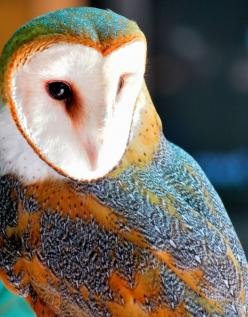 """Your eyes can be so cruel, just as I can be so cruel. How to live without your heart beat...how do I. Live. Without. You?"": Animals, Color, Children, Owls Owls, Beautiful Birds, Photo, Barn Owls, Eye"